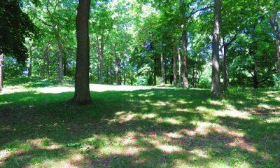 Forêt paisible
