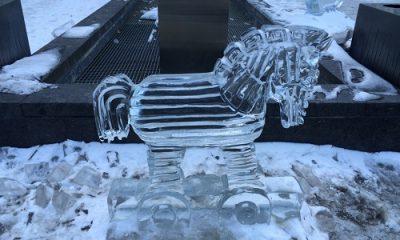 Cheval de glace