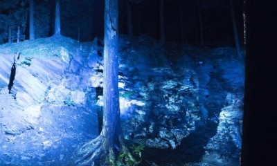 Floresta lumina