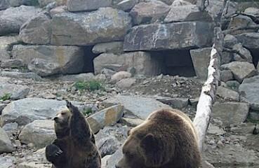 On retrouve l'ours dans toutes les provinces du Canada, saufs l'île-du-Prince-Édouard, ainsi que dans le Yukon et les Territoires-du-Nord-Ouest. Photographie de GrandQuebec.com.