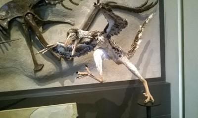 oiseaux dinosaures
