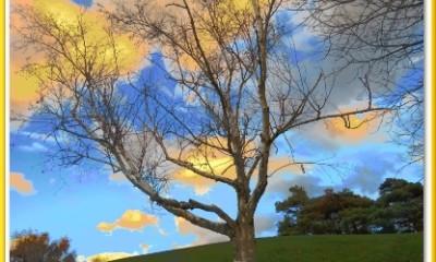 Cadres photos arbre