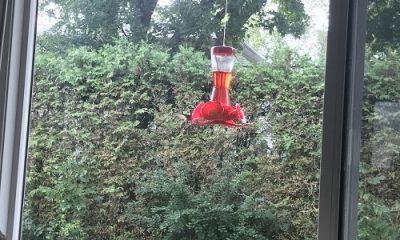 Abrouvoir colibri