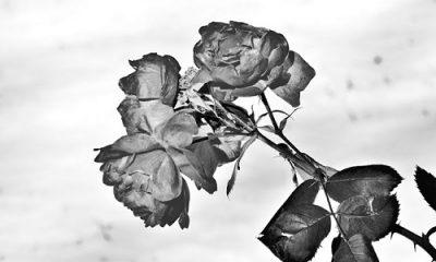 Megan Jorgensen fleurs