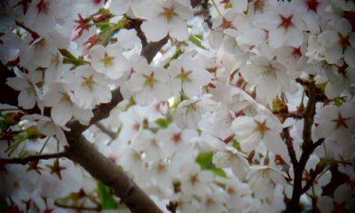 Fleurs, par GrandQuebec.com