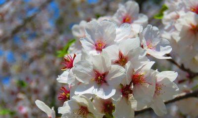 fleurs rose et blanches