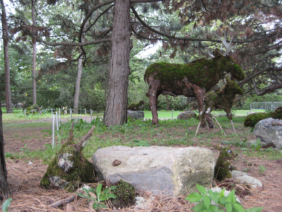 Les orignaux de l'Abitibi. Photo : © Marina Yakovina