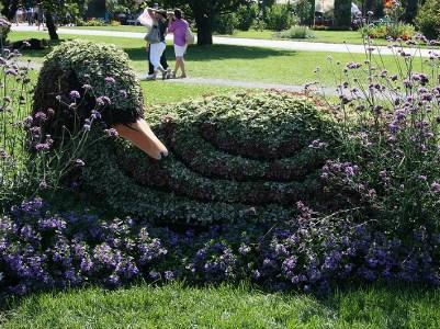 Le cygne trompette, autrefois largement répandu en Amérique du Nord, a failli disparaître, chassé pour sa chair et son duvet. Photo : © GrandQuebec.com