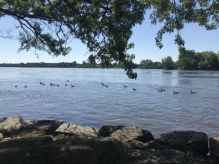 L'art de la prophétie est extrêmement difficile, surtout en ce qui concerne l'avenir. (Mark Twain.). Photo par Megan Jorgensen, un groupe de canards navigant dans la rivière des Prairies.