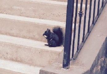 """""""J'ai avalé l'appât, l'hameçon et la ligne. Puis, en remontant le fil, j'ai avalé le pêcheur. """" (Jean-Claude Dunyach, Dix jours sans voir la mer.) Photographie de l'écureuil noir par Megan Jorgensen."""