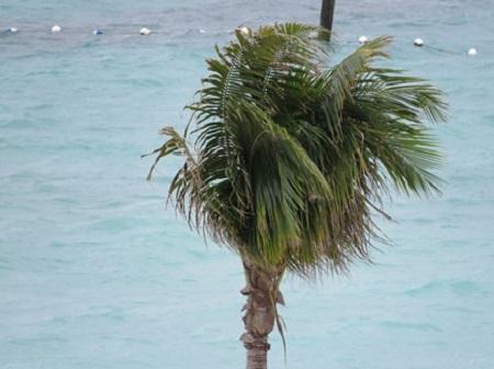 Rumeur est le plus vieux média du monde. (Jean-François Revel.) Photographie d'une palme aux îles des Bahamas par Megan Jorgensen.