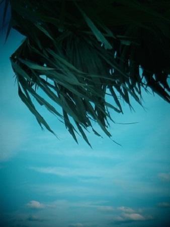 Les éternels soleils de la jeunesse lui apparurent en songe et il revit la vallée de Méros, ombragée par les myrtes, rafraîchie par le fleuve Zémander sur les rives duquel il se promenait le soir aux côtés de Nylissa, regardant naître dans les cieux les étoiles de l'été, regardant l'eau du fleuve – et les yeux de sa bien-aimée (Poséidonis, Clark Ashton Smith). Photographie par Megan Jorgensen.