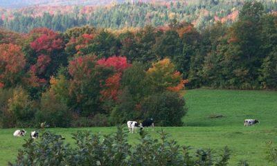 Paysage bucolique dans les environs de Saint-Nazaire-de-Dorchester. Source de la photographie : Site Web de la municipalité.