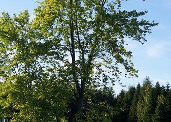 Municipalité de Sainte-Félicité, paysage rural. Source de l'image : Site Web de Sainte-Félicité, image libre de droits.