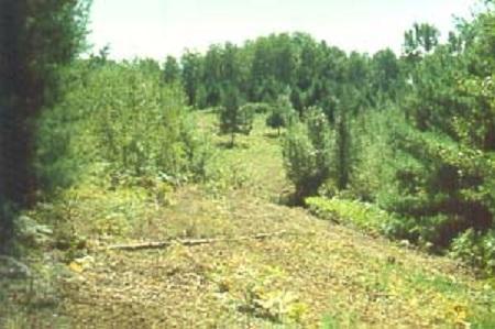 Dédiée à un de nos grands botanistes, la réserve écologique du Père-Louis-Marie assure la protection de vastes pinèdes blanches dans une grande érablière à bouleau jaune.
