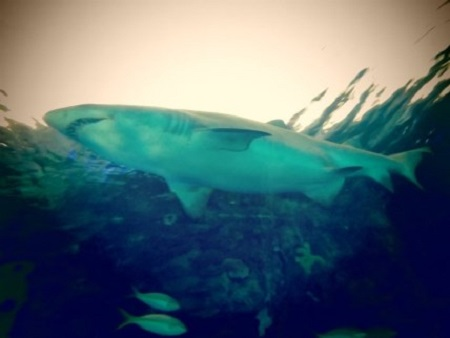 On ne met pas les requins en cage, on y met les compagnies d'assurance pour les surveiller (citations de Megan Jorgensen). Photographie de GrandQuebec.com.