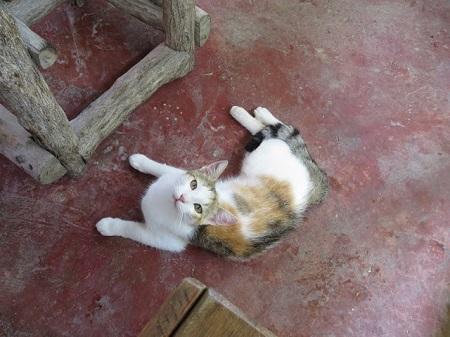 Testez vos textes sur les chats. S'ils réagissent positivement, vous avez réussi à rédiger un texte digne des auteurs classiques. Photographie d'un chat : Megan Jorgensen.