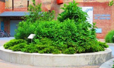 First nations garden (Jardin des premières nations à Toronto). Le bonheur, c'est avoir une bonne santé et une mauvaise mémoire. (Ingrid Bergman, comédienne suédoise, née en 1915 et morte en 1982). Photo : Megan Jorgensen.