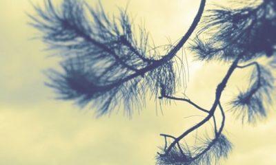 Ah! voici un changement de décor, à vue, dans le paysage; regardez-moi çà! s'écrie le jeune artiste en ouvrant son album et taillant ses crayons; je vais croquer ce site enchanté. (Gustave Aimard and Jules Berlioz d'Auriac Jim l'indien). Photographie de Megan Jorgensen.