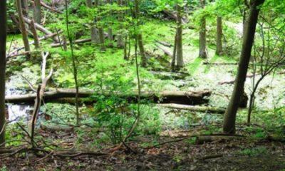 Un marais forestier. Photographie par Megan Jorgensen.