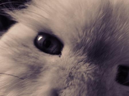 Si votre chien saute sur votre lit, c'est qu'il adore votre compagnie. Si votre chat saute sur votre lit, c'est qu'il adore votre lit. (Alisha Everett, écrivain américain.). Le chat le plus beaux au monde. Photo par Megan Jorgensen.