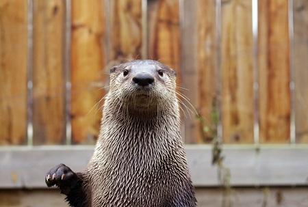 Un des vrais propriétaires du Centre de la Biodiversité. Photo : Centre de la Biodiversité.
