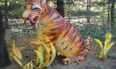 La réclusion améliore la condition humaine. Pour obtenir des hommes excellents, on les emprisonne d'ordinaire un certain temps (Max Aub). Image : Un tigre emprisonné dans le Jardin botanique (secteur du Jardin des rêves) de Montréal. Photo de Megan Jorgensen.