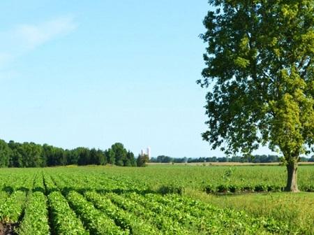 Paysage rural à Saint-Roch-Ouest. Source de la photo : Site Web de la municipalité.