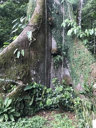 """""""On ne nuit jamais à sa fortune en faisant l'aumône."""" Un arbre vieux de 300 ans au Costa-Rica en décembre. Photo de Megan Jorgensen."""