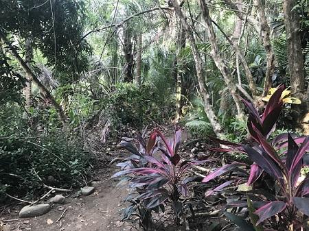"""""""Ce monde est la prison du croyant et le paradis de l'infidèle."""" Forêt humide typique en Amérique centrale en décembre. Photo de Megan Jorgensen."""