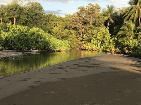 """""""Le voyageur égaré ramène la chamelle égarée."""" Embouchure d'une petite rivière sans nom au village d'Uvita-de-Osa au Costa Rica, en décembre. Photo de Megan Jorgensen."""