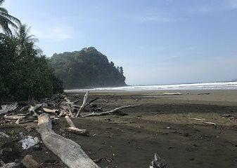 Un grand nombre de troncs parsèment le sable de la plage au village d'Uvita de Osa, au Costa Rica. Ces bois sont habités par des crabes et d'autres petits animaux. Décembre au Costa Rica. Photo de Megan Jorgensen.