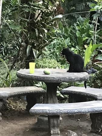 Une panthère noire qui garde la maison. La table et les bancs sont en pierre.