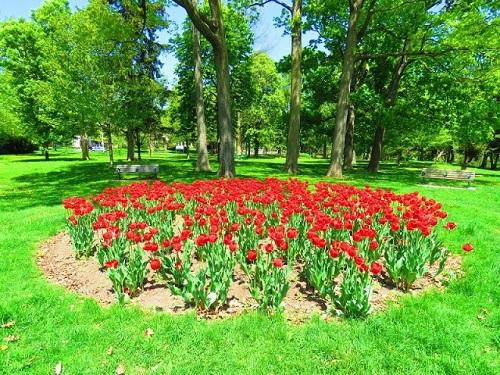 Fleurs du parc Chorley. Photo de Megan Jorgensen.