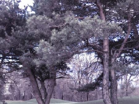 Forêts de l'Outaouais. Photo de Megan Jorgensen.