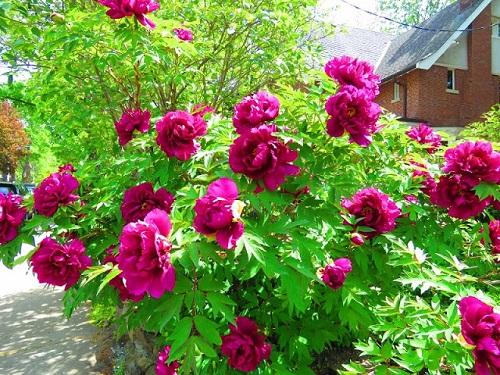 On y voit les fleurs partout, chaque maison est décorée avec des fleurs, en fait. Photo de Megan Jorgensen.
