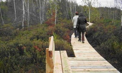Trottoir du bois sur pilotis du sentier du lac Rose. Source la la photographie : Site Web de Sainte-Marie-de-Blandford.