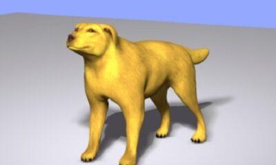 Le chien jaune. Illustration de Megan Jorgensen.