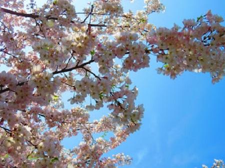La paix et les fleurs. Photo de Megan Jorgensen.