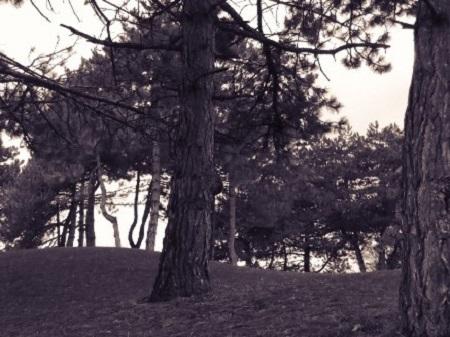Forêt noire. Photo de Megan Jorgensen.