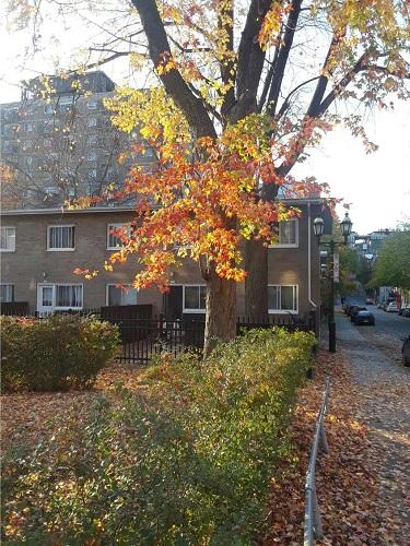 Habitations Jeanne-Mance. Photo de GrandQuebec.com.