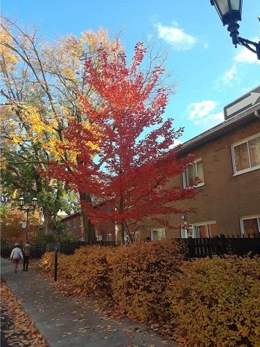 Habitations Jeanne-Mance en automne 2020. Photo de GrandQuebec.com.