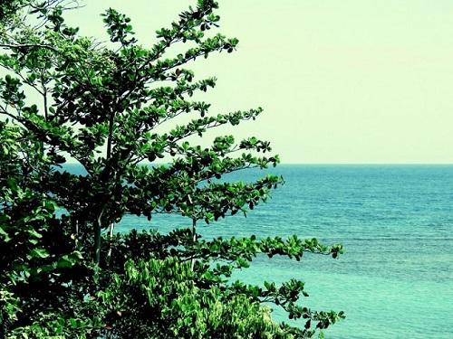 Un arbre qui aime la mer. Photo de Megan Jorgensen.