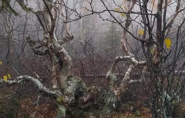 Forêt de Québec. Crédit photo : Nataliya Voroboyova.