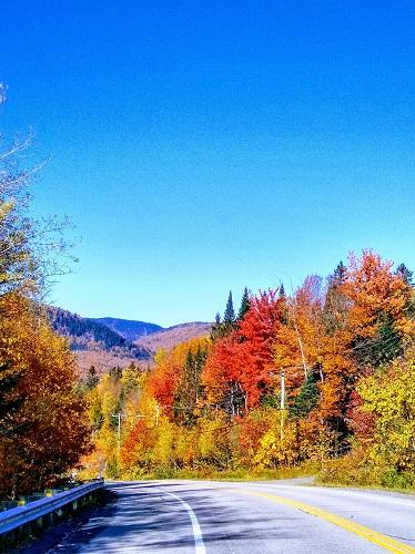 Un chemin forestier au Québec. Photo d'Anatoly Vorobyov.