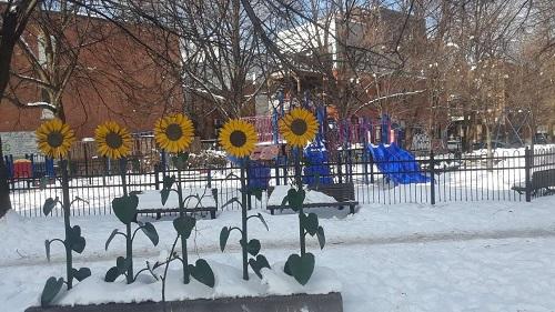 Tournesols en hiver. Photo de GrandQuebec.com.