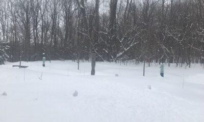 La forêt québécoise en hiver. Photo de GrandQuebec.com.