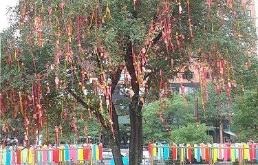 arbre de souhaits
