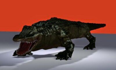 Le père d'Ali calcula mal son lancer et fut projeté à bas de son radeau par un crocodile. Illustration de Megan Jorgensen.