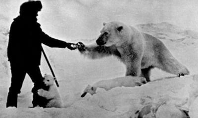 ourse polaire